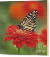 Monarch And Red Zinnia Wood Print