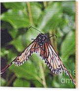 Monarch Butterfly In Flight Wood Print
