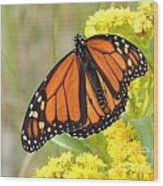 Monarch Butterfly Wood Print by Laurence Oliver