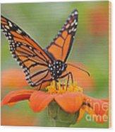 Monarch Butterfly Macro Wood Print