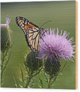 Monarch Butterfly On Bull Thistle Wildflowers Wood Print