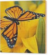 Monarch Butterfly On Flower Wood Print
