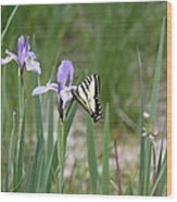 Monarch Butterfly On Iris Ser2 Wood Print