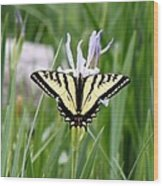 Butterfly On Iris Ser3 Wood Print
