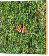 Monarch Butterfly Photograph Wood Print