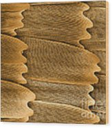 Monarch Butterfly Scales, Sem Wood Print