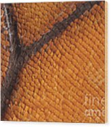 Monarch Butterfly Wing Scales Wood Print