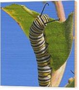 Monarch Caterpillar Wood Print