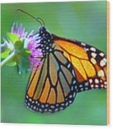 Monarch Glow Wood Print