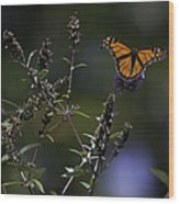 Monarch In Morning Light Wood Print