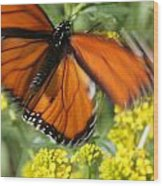 Monarch In Motion Wood Print