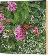 Monarch In The Garden   Wood Print