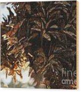 Monarch Jumble Wood Print