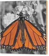 Monarch On Black And White Wood Print