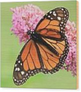 Monarch On Blossoms Wood Print