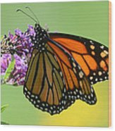 Monarch On Green Wood Print