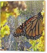Monarch On The Dunes  Wood Print