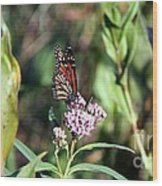 Monarch On The Wild Flowers Wood Print