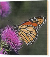 Monarch On Thistle 13f Wood Print