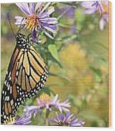 Monarch profile one Wood Print