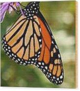 Monarch Rest Wood Print