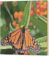 Monarch Sipping Wood Print