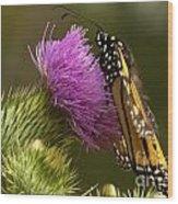 Monarch Thistle Munching Wood Print