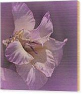 Monday's Gladiola No. 6 Wood Print