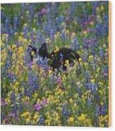 Monet's Cat Wood Print