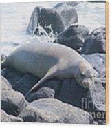 Monk Seal Wood Print