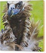 Monk Vulture 5 Wood Print