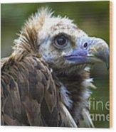 Monk Vulture Wood Print