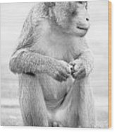 Monkey Dick Wood Print