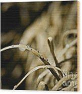 Monkey Grass Dewdew Wood Print