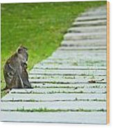Monkey Mother With Baby Resting On A Walkway Wood Print