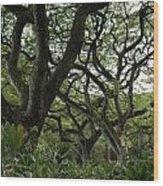 Monkeypod Trees II Wood Print