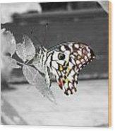 Monochromatic Butterfly Wood Print