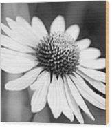 Monochrome Echinacea Wood Print
