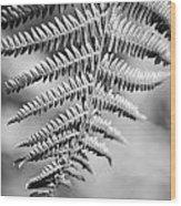 Monochrome Fern Frond Wood Print