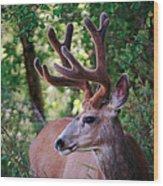 Monster Buck Wood Print