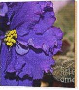 Monster Violet Wood Print