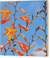 Montbretia And Blue Skies Wood Print