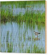 Montezuma National Wildlife Refuge Wood Print