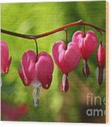 Month Of May Bleeding Hearts Wood Print