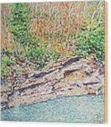 Montlake In Winter Wood Print