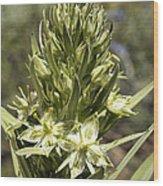 Monument Plant (swertia Radiata) Wood Print