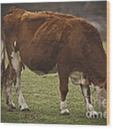 Moo Moo Cow Wood Print