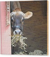 Moo Now Wood Print by Kathy Gibbons