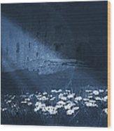 Moon Light Daisies Wood Print