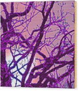 Moon Tree Pink Wood Print by First Star Art